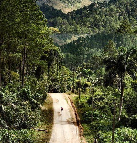 Culture - forêt de Cuba
