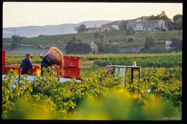 Domaine viticole de la Bouysse