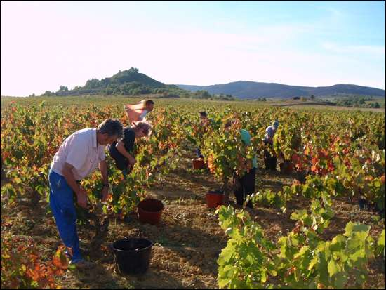 Domaines viticoles de Longueroche
